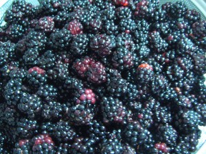 Blackberries from my 'hood